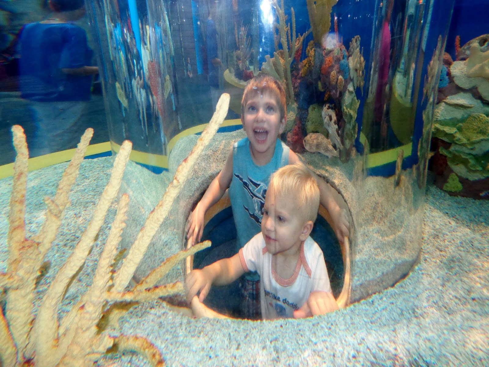 Fish aquarium in canada - Pop Up Perspective At Ripley S Aquarium
