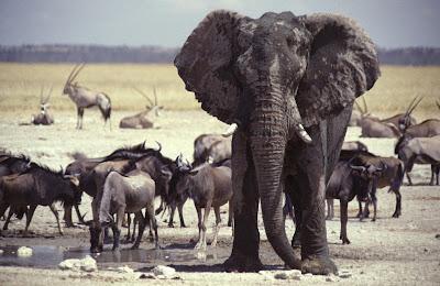 Landscape Animals Photo