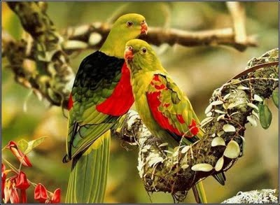 Beautiful Love Birds 5