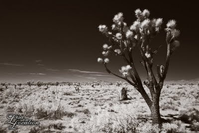 Joshua tree highway Nevada, infrared, New Braunfels photographer, Lisa on Location