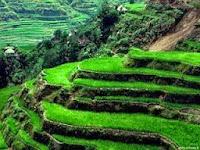 Cara Membuat Tanah Tandus Menjadi Subur (Cara Menyuburkan Tanah Pertanian)