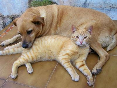 Porque os cachorros são rivais dos gatos?