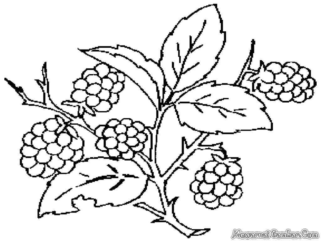 Gambar Tanaman Buah Anggur Untuk Mewarnai