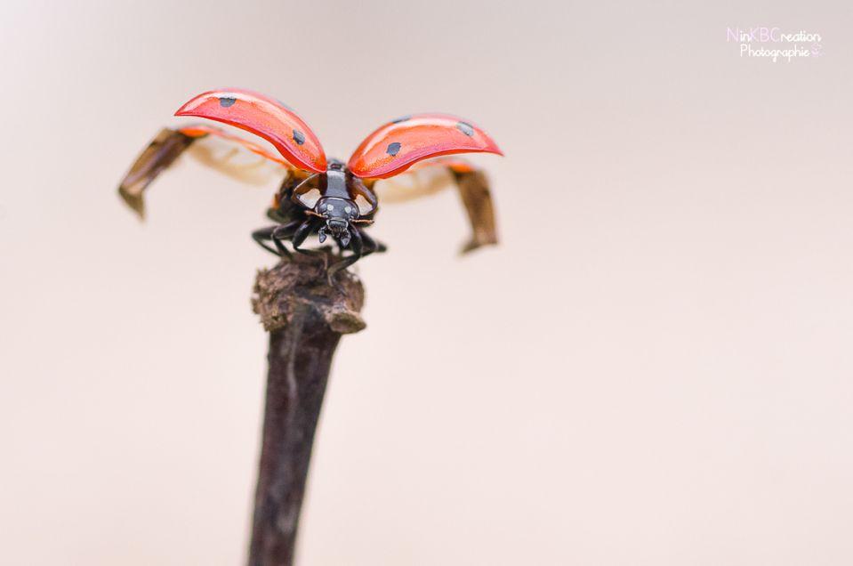 15. L'envol de Ladybird 2 (front)