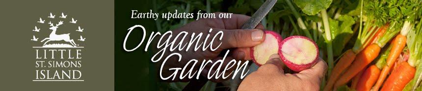 Little St. Simons Island's Organic Garden