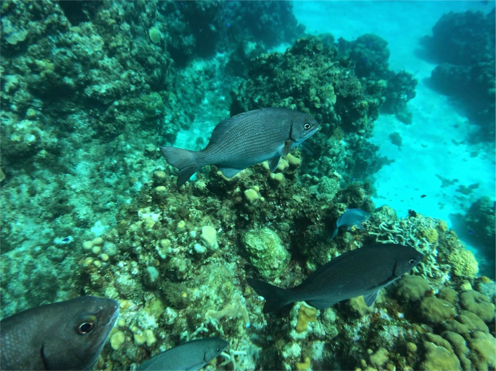 Reef Dive Cayman Islands\\ Princess Cruises