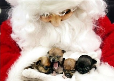 Santa dogs pictures