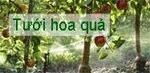 Tưới cây ăn trái