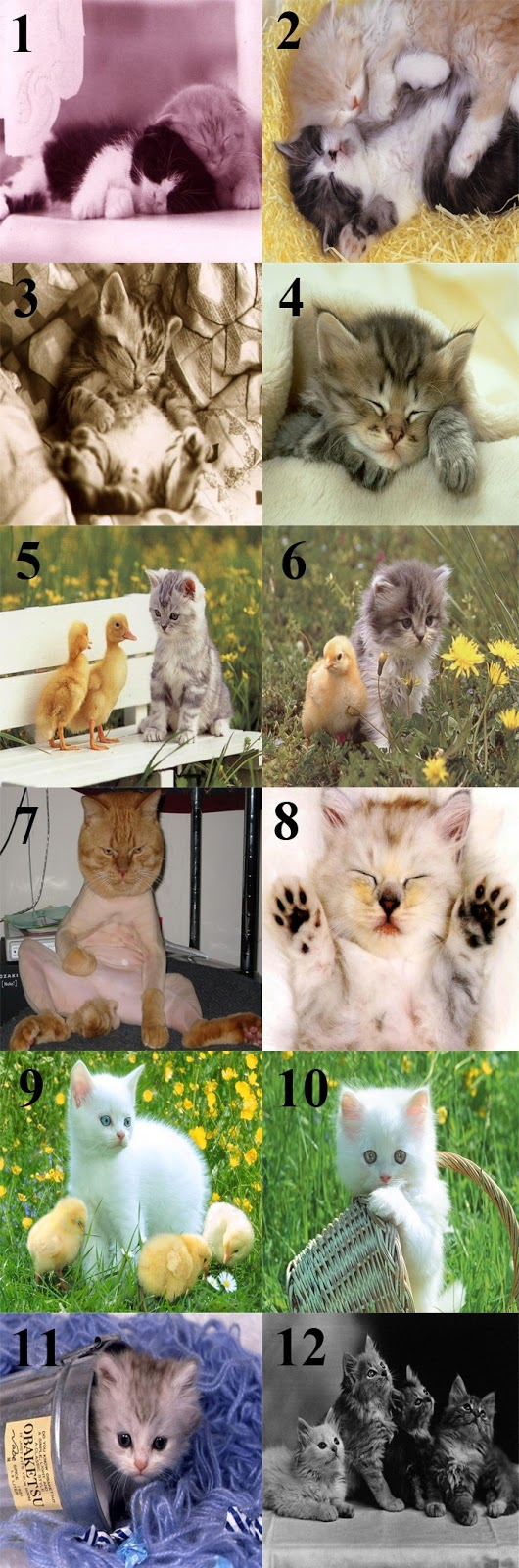 Download Gambar Kucing Lucu Imut 1-12