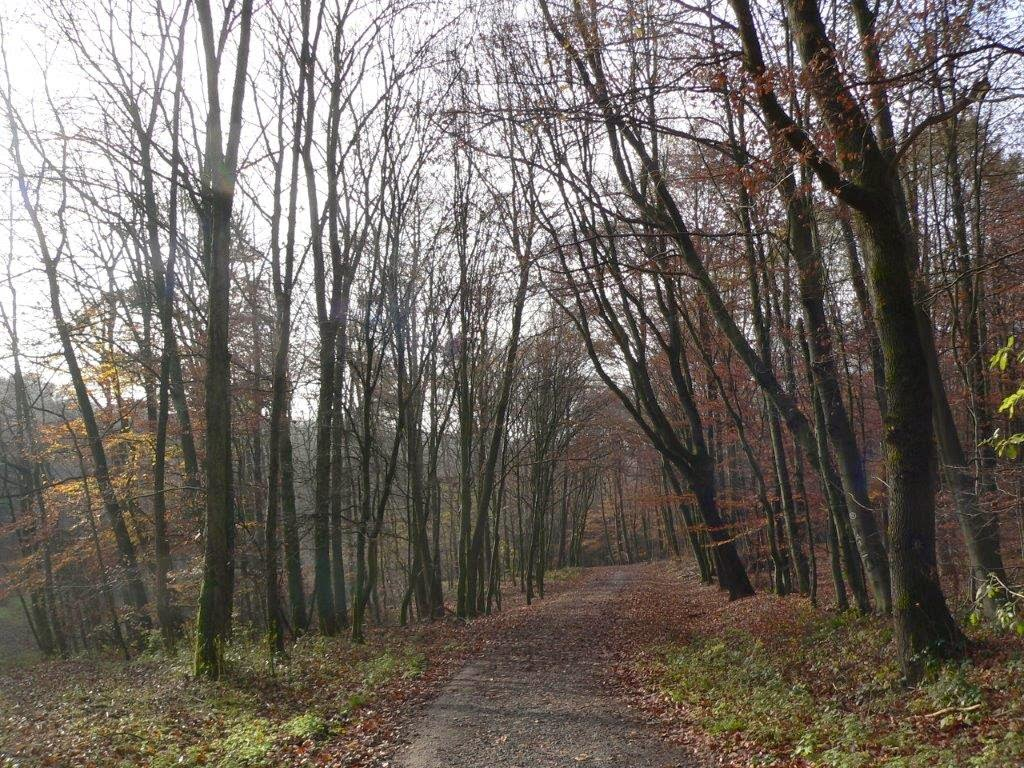 Spaziergang Winter Kalt Hund Wochenende Bäume kahl
