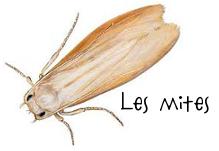 Un blond une brune astuces naturelles plus d insectes - Huiles essentielles contre mites ...