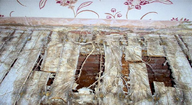 Surveying Property Dry Rot An Intelligent Fungus