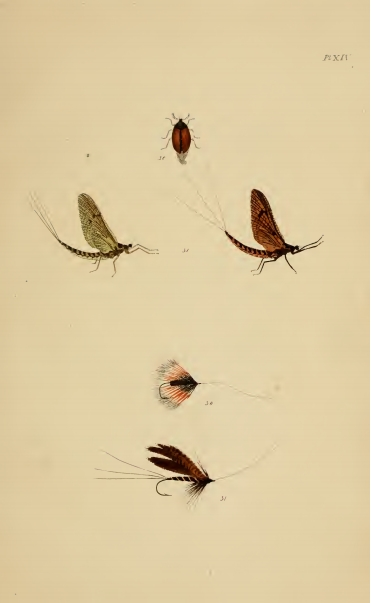 The study fysshynge for compliments for Fly fishing entomology