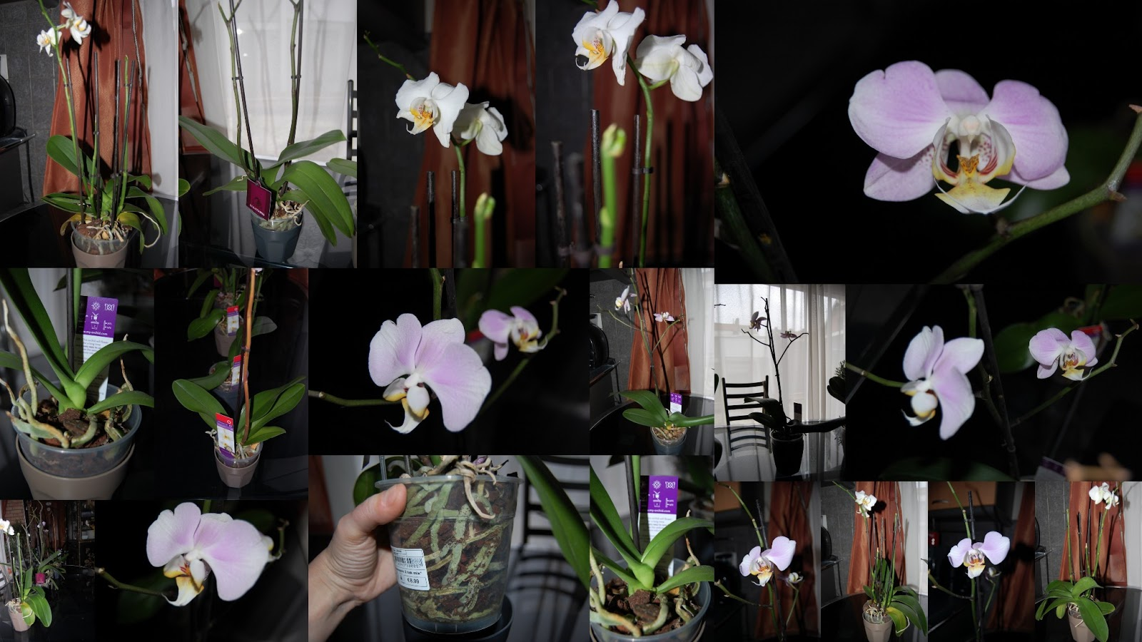 Mon blog parmi tant d 39 autres lechatmorpheus je me suis prise de passion pour les orchid es Comment entretenir orchidee