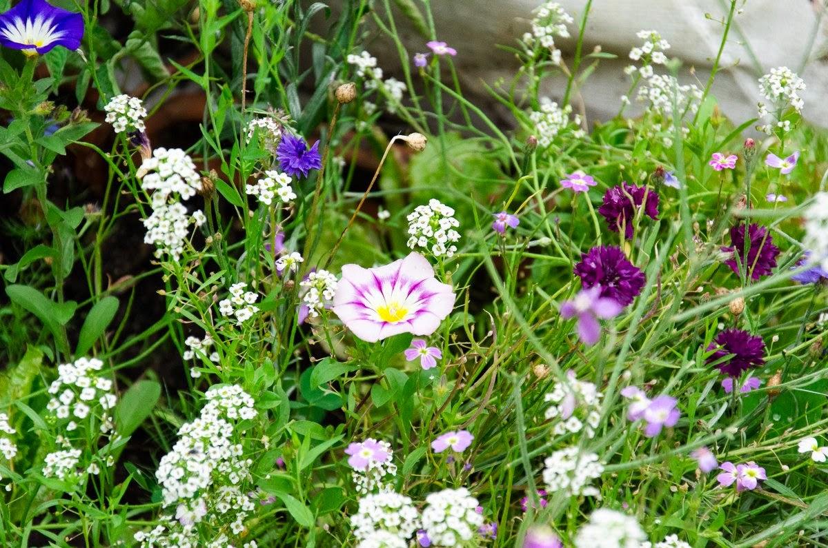 Paris - jardin de la cité Aubry - fleurs