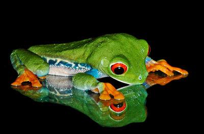Fotograf�as de ranas venenosas by Michael Kern