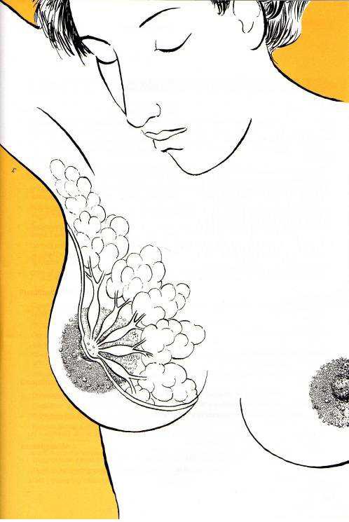lactancia materna: ANATOMÍA DE LA GLÁNDULA MAMARIA