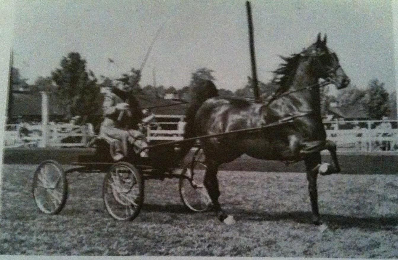 Vanity+2 the american saddlebred 4 12 14 s j \