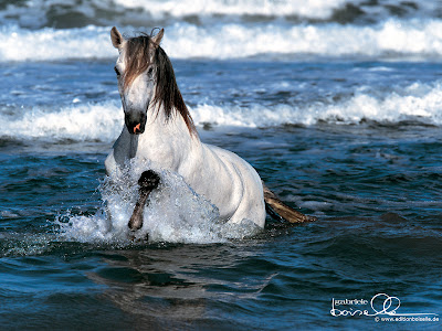 HD Wallpapers for Horses