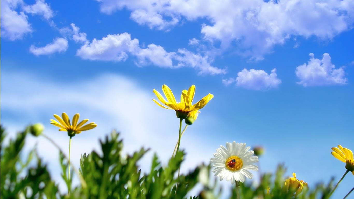 http://4.bp.blogspot.com/-FeQaH3h4Bqc/TscUi-1Xo1I/AAAAAAAAAww/R8VjbSfDZiU/s1600/daisy-hd-1-771654.jpg