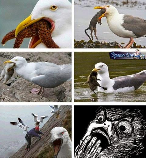 funny birds pics humor