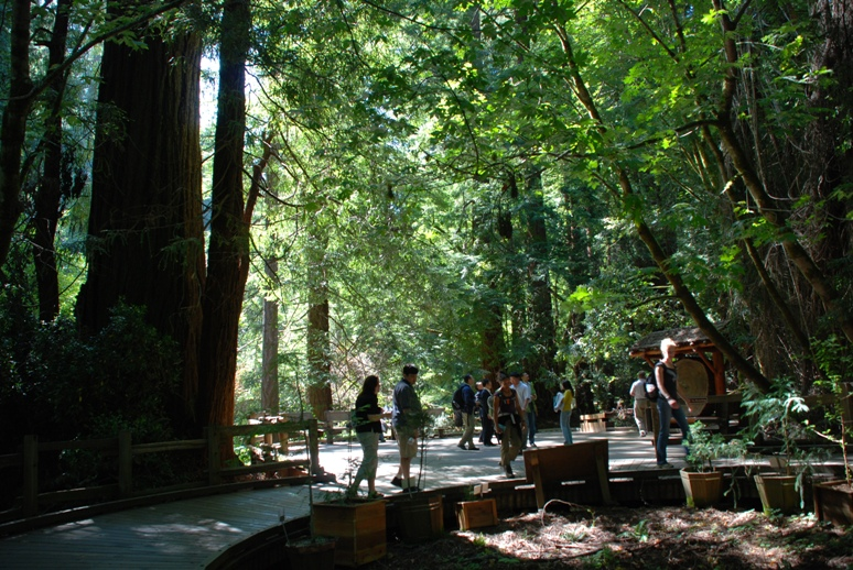 Road Trip Postcard: Muir Woods