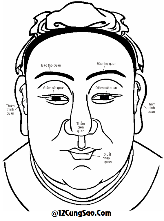 6.  NGŨ QUAN Gồm lông mày, mắt, tai, miệng, mũi.