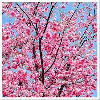 Pink Tree, by Mark oh! (via Flickr)