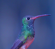 Birding vs Journaling