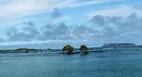 Concho de Perla, Isabela Island, Galapagos