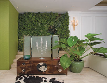 Beautify The Room With Indoor Plants