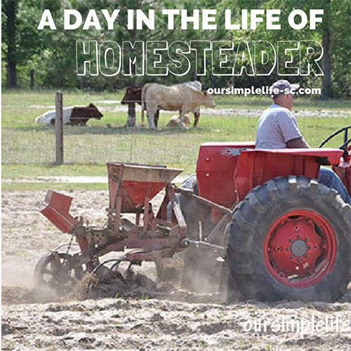 A Day in the Life of a Homesteader, shared by Our Simple Life
