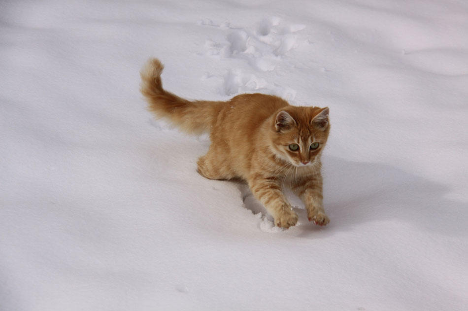 super lovely cats cats amp snow