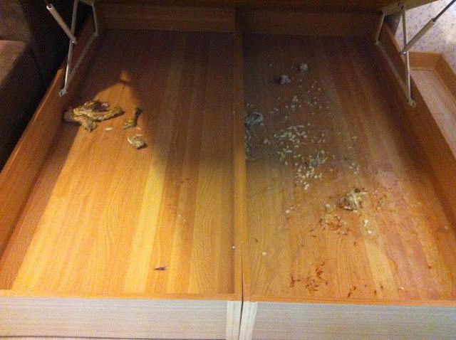 【租屋代管的重要】惡質房客 噁心的臭味 案例處理