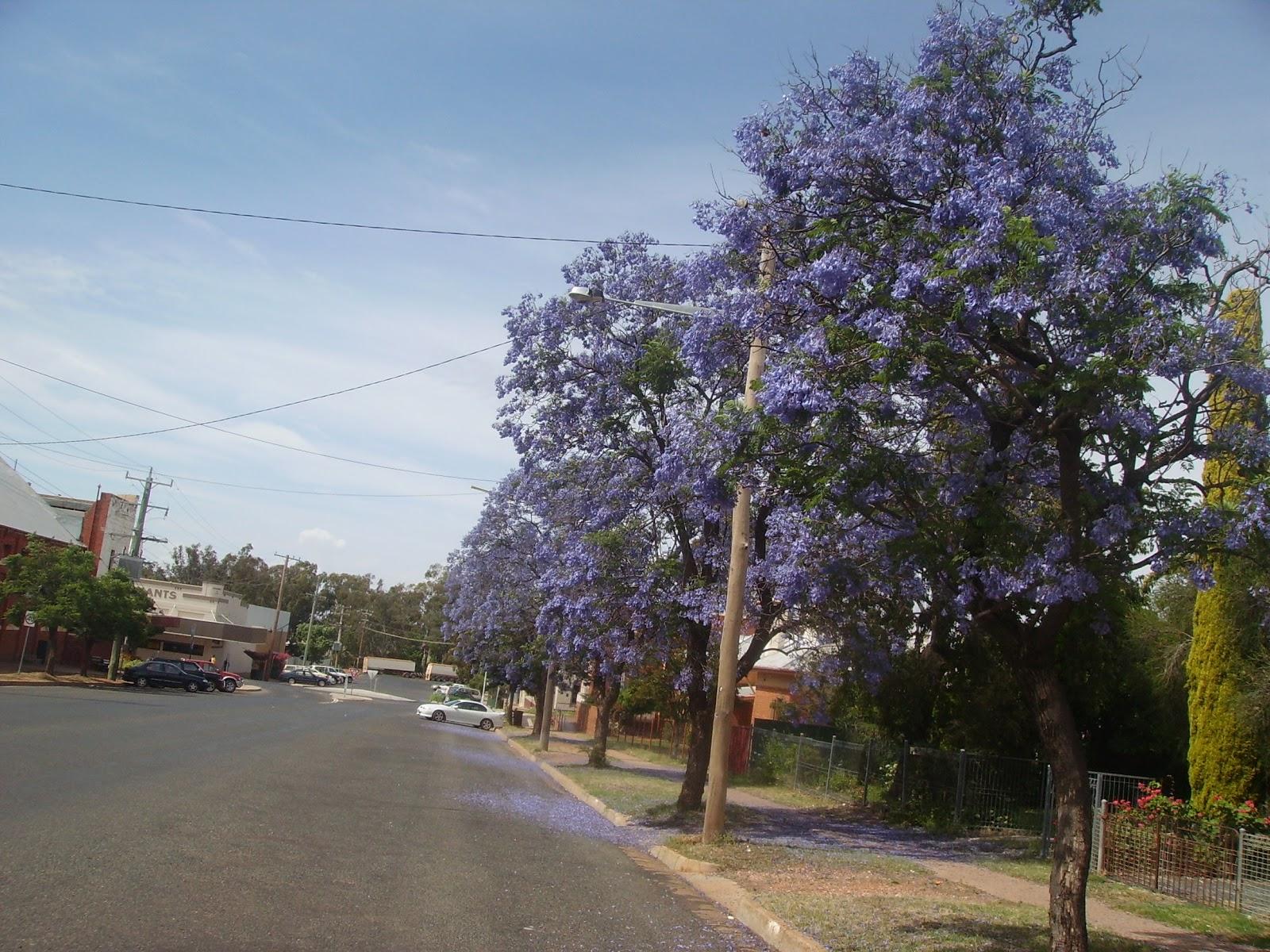 Unskilled mining jobs australia qld