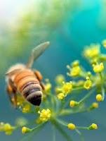 Bee Propolis Blog
