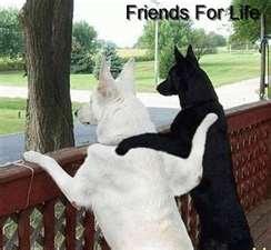 what a friendship