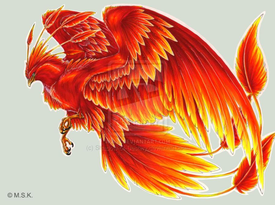 23 Gambar Burung Phoenix Api Paling Dicari