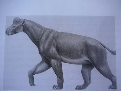 perissodactyla prehistorica Tylocephalonyx