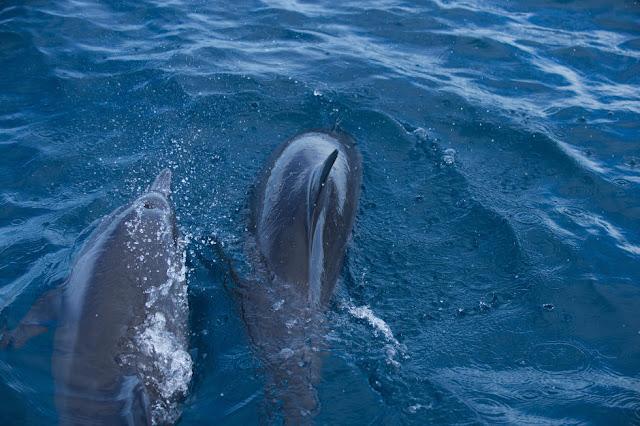 23 Dolphins Fiji Womens Pro Fotos WSL  Stephen Robertson