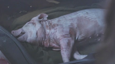 PLL 4x1 Dead Pig in Wilden's Trunk