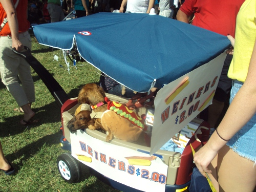 Hot Dog dachshunds at the 11th Annual Dachshund Winterfest