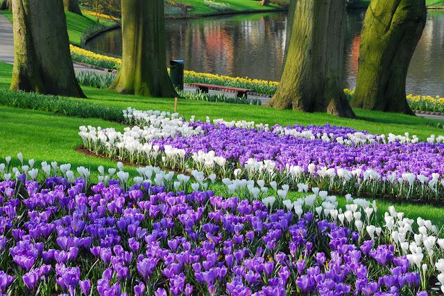 أكـــــــبر حديقة فـــــــــي العالم .....!