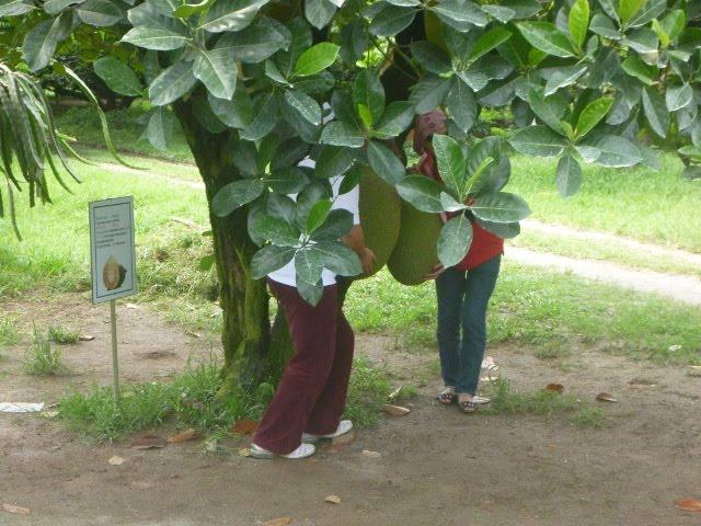 مزرعة فواكه ديسارو.. هنا تتعلم كل شيء عن الفواكه الاستوائية