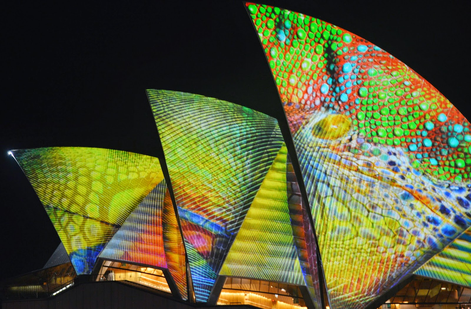 Australia, Culture, Festival of Lights, Lights Festival, News, Offbeat, Sydney Light Show, Sydney Opera House, Vivid Festival, Vivid Festival Photo,
