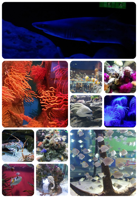 two oceans aquarium part 1