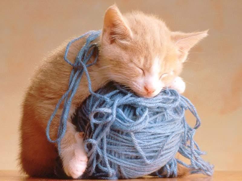 Kisah Menarik Rasulullah s.a.w dan Kucingnya | DARUL ULUM IHYA ULUMUDDIN