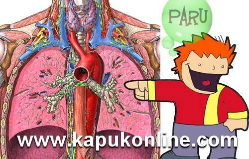 Organ Paru