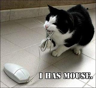 smiješne slike Mačka uhvatila miša