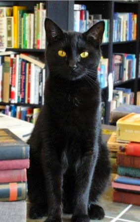 The bookish cat on duty